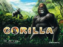 Скачать в Вулкане Gorilla