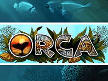 Скачать автоматы Вулкан Orca